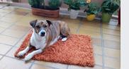 Paulchen jetzt Balou seit 04.07.2015 in seinem neuen Zuhause