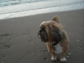 Ino das erste Mal am Meer