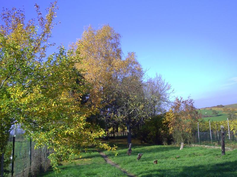 05.11.2015 ein wunderschöner Herbsttag