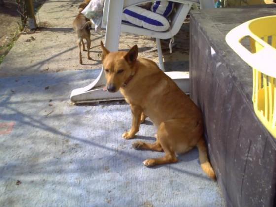 20.03.2012-10 Phoskitos