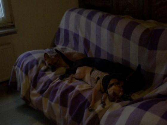 02.01.2015-1 Otto, Yuma + King